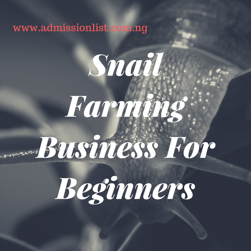 Profitable Snail Farming Business For Beginners In Nigeria